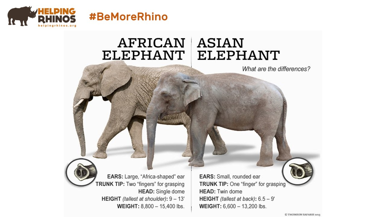 African-Asian-Elephant-Differences
