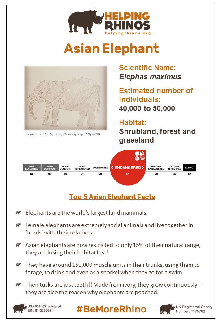 Asian-Elephant-Factsheet