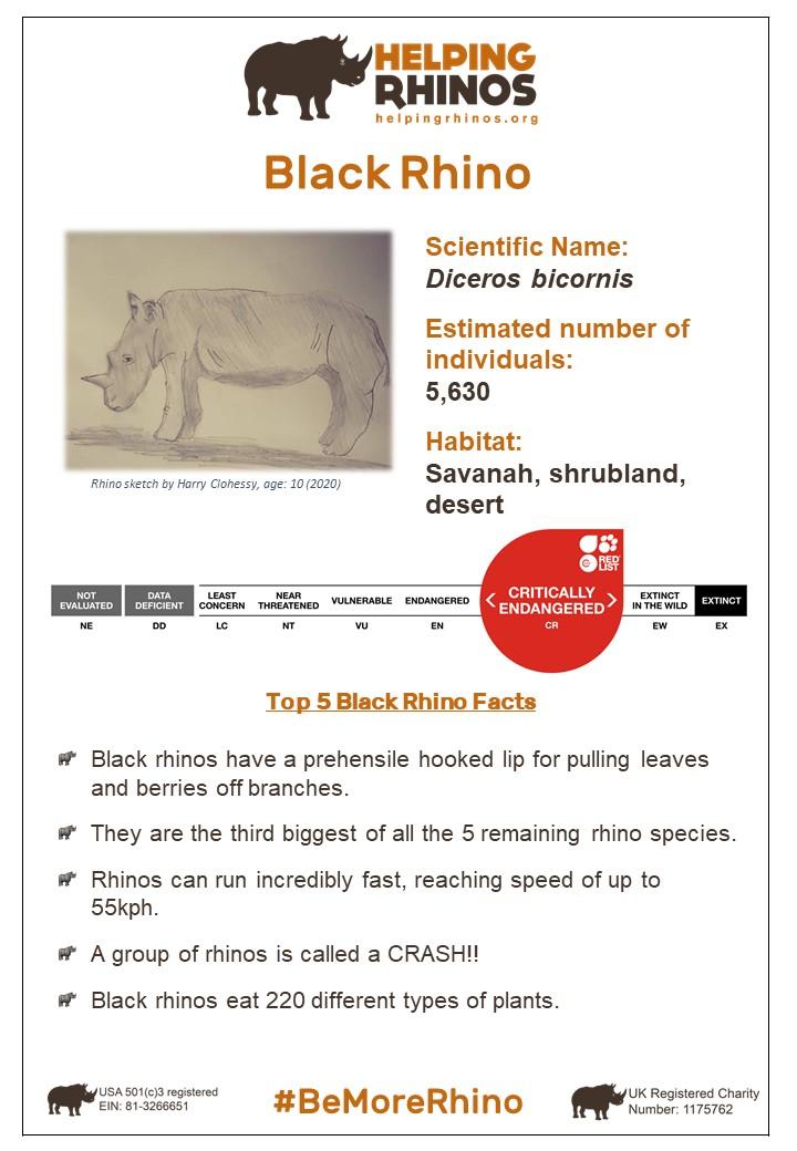 Black-Rhino-FactSheet