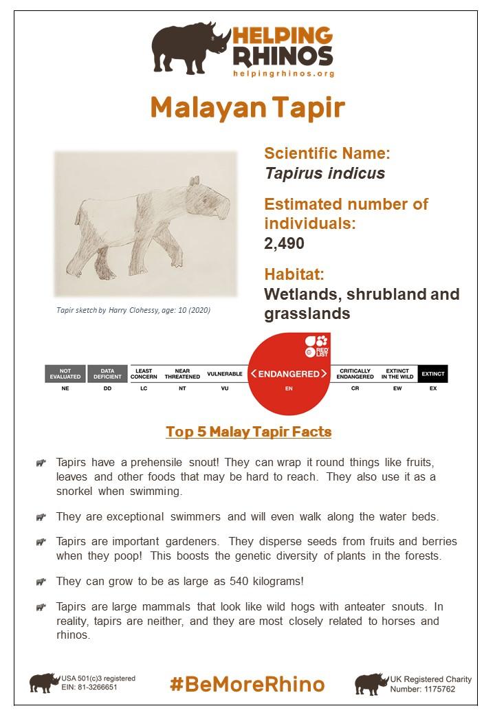 Malayan-Tapir-Factsheet