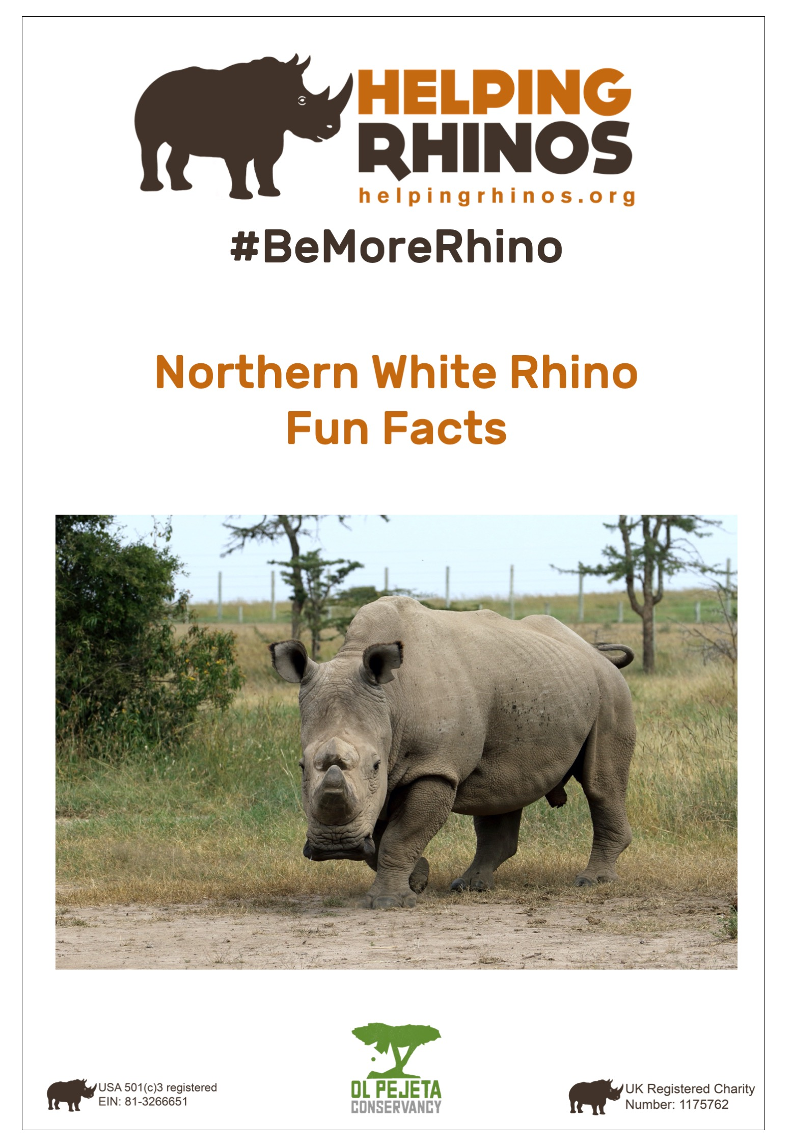 Northern White Rhino Factsheet