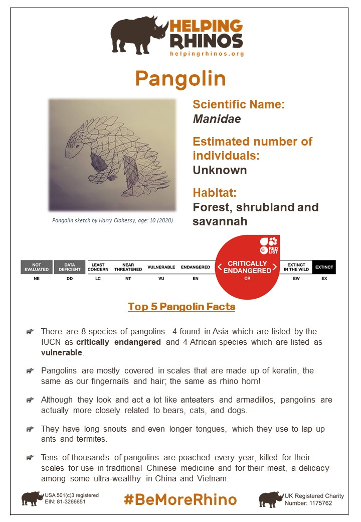 Pangolin-Factsheet