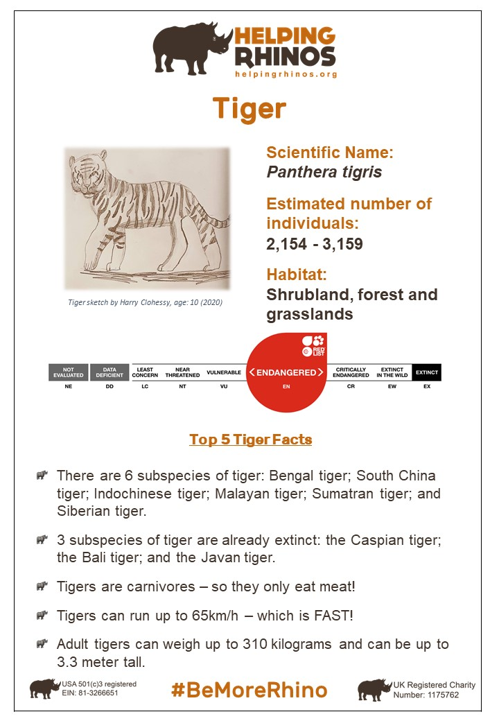 Tiger-Factsheet