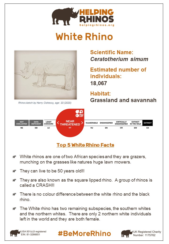 White-Rhino-Factsheet