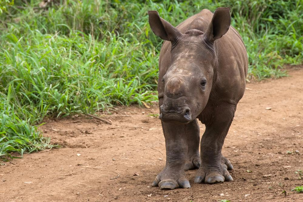 Vicious Attack on Rhino Orphanage