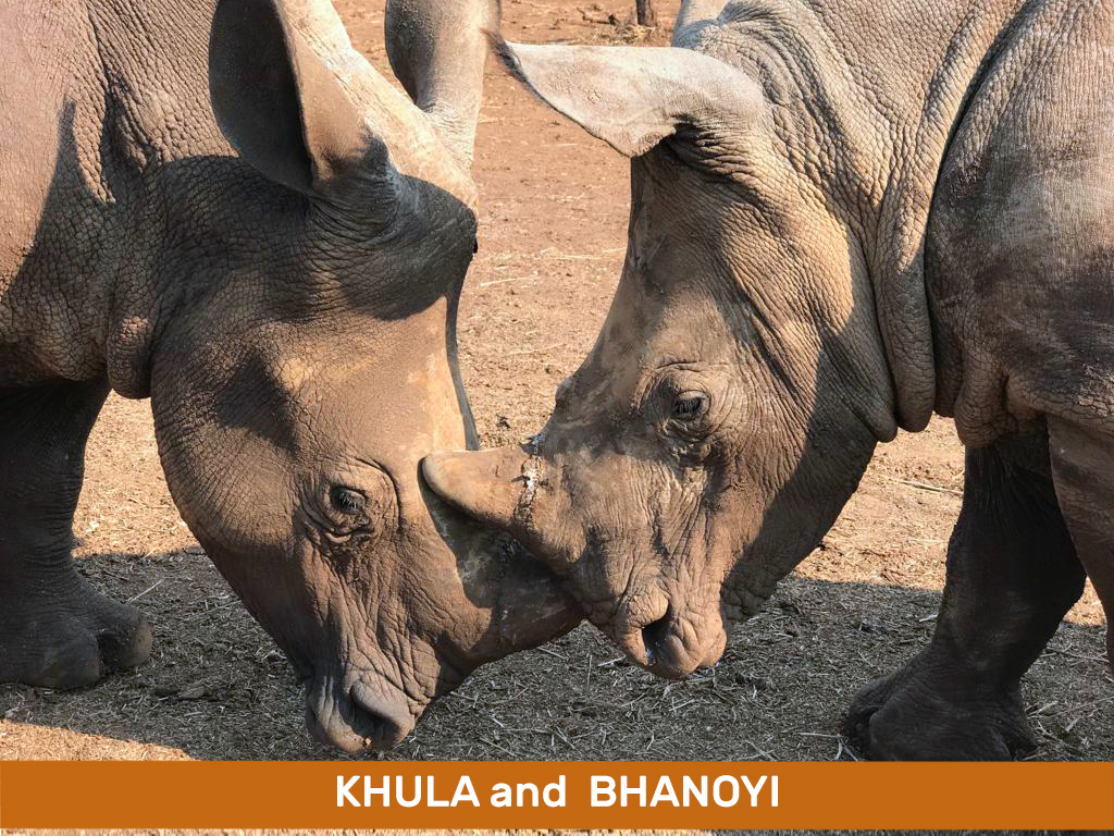 Khula and Bhanoyi