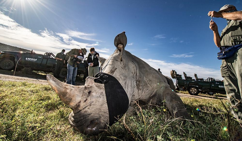 Rapid Response for Rhinos LIVE Event
