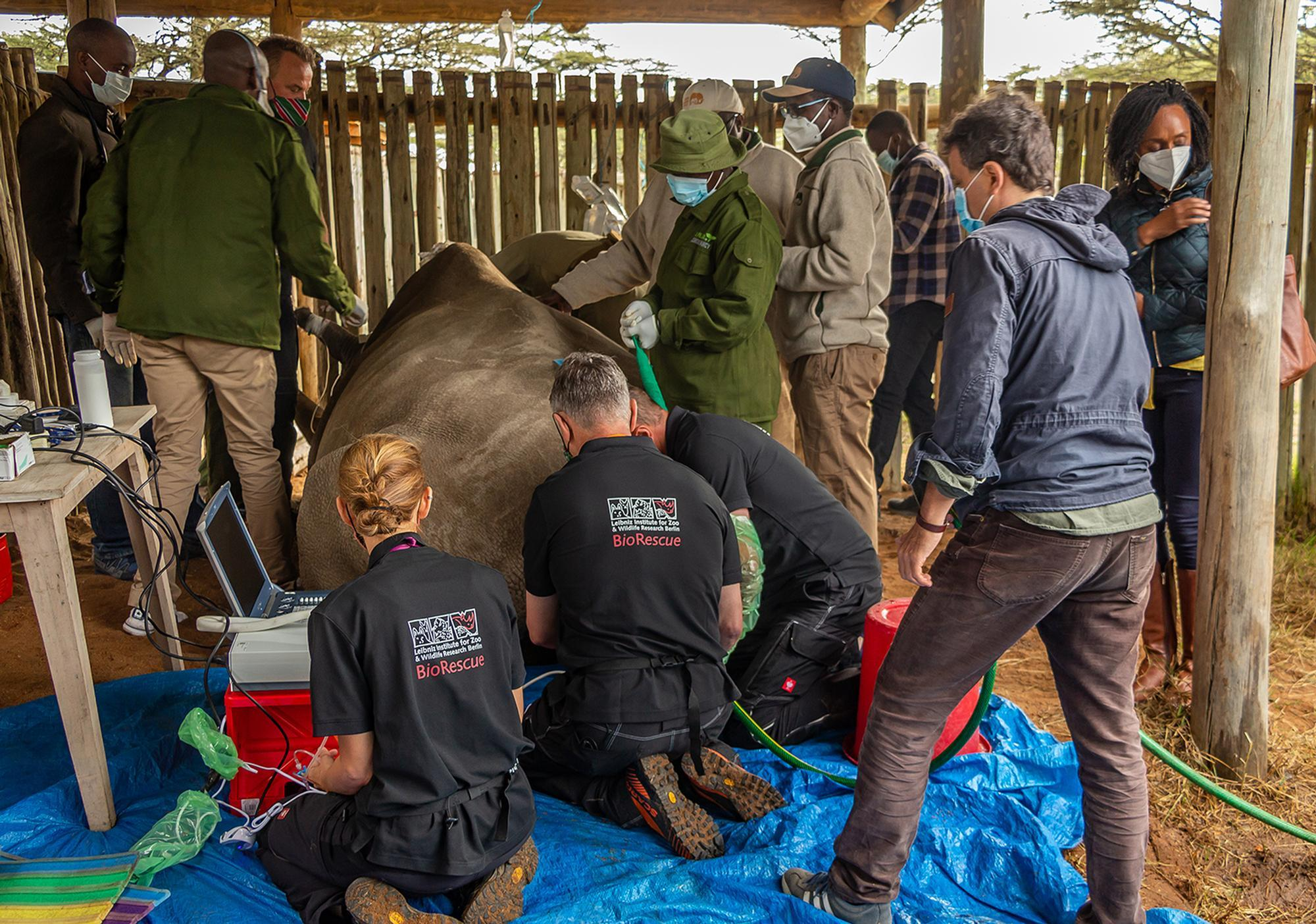 Set Back in the Efforts to Save the Northern White Rhino