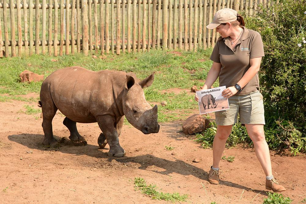 Why a Rhino Adoption makes a great gift