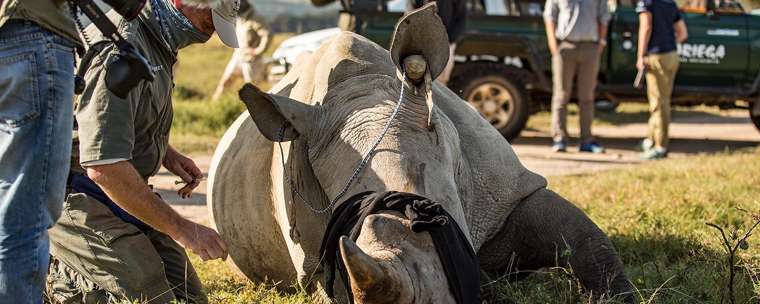 Rapid Response for Rhinos - LIVE