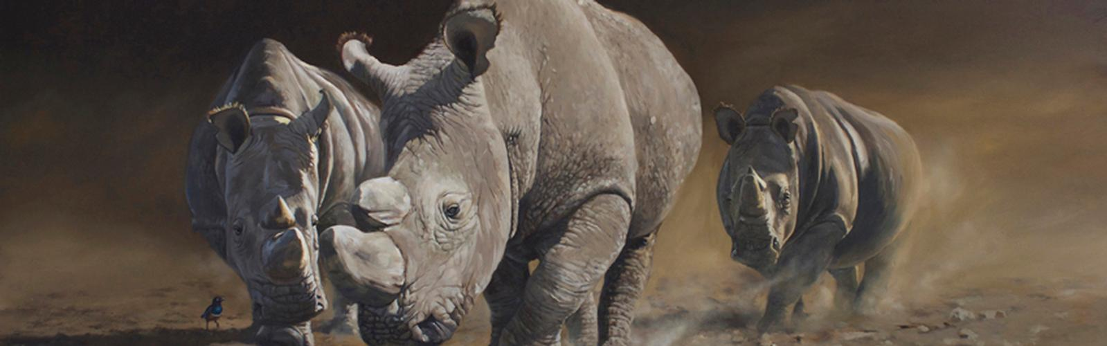 Wild World of Rhinos